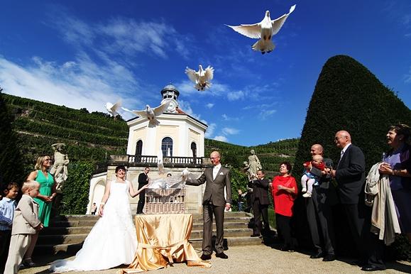 Hochzeitsfotograf - Hochzeitsfoto vom Hochzeitspaar, die auf Schloß Wackerbarth Tauben steigen lassen
